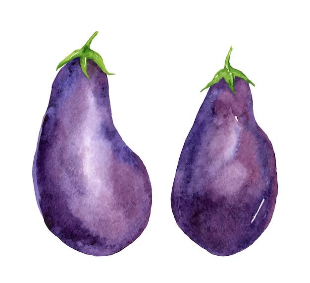 Aquarell-set aus zwei rohen auberginen oder auberginengemüse.