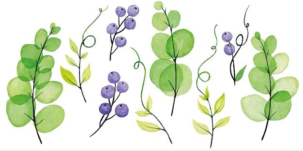 Aquarell set blätter und zweige vicia cracca grüne transparente blätter und lila beeren