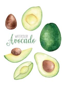 Aquarell-set mit avocado in zwei hälften geschnitten, scheiben und ganze aquarellillustration