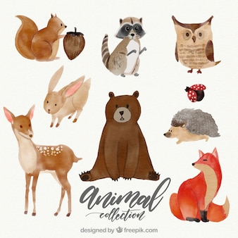 Aquarell-set von schönen tieren