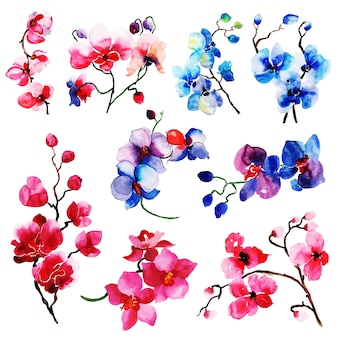 Aquarell sommer floral und blätter elemente sammlung