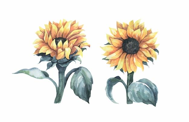 Aquarell-sonnenblumen-sammlung.