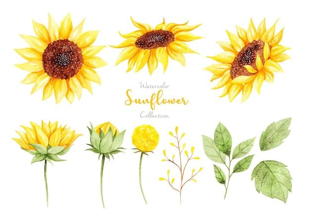 Aquarell-sonnenblumen-sammlungssatz