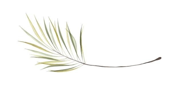 Aquarell transparente grüne palmblätter isoliert auf weißem hintergrund. kunst botanisches aquarell handbemalt. perfekt für einladungen, grußkarten oder wanddekoration.