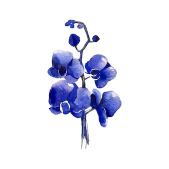 Aquarell von blauer orchidee
