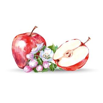 Aquarellapfelblumen und -äpfel. vektor-illustration