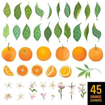 Aquarellelemente von orangen, blättern und blumen für poster, zitrus-sommerbanner, designvorlagen, frühlingstapeten. vektor-illustration