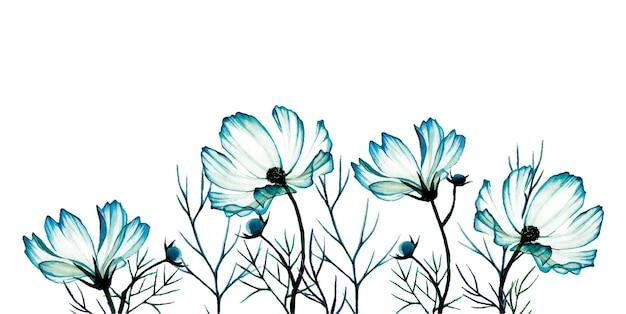 Aquarellgrenze mit transparenter blauer wildblumenkosmoskamille