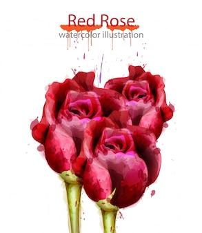 Aquarellhintergrund der roten rosen