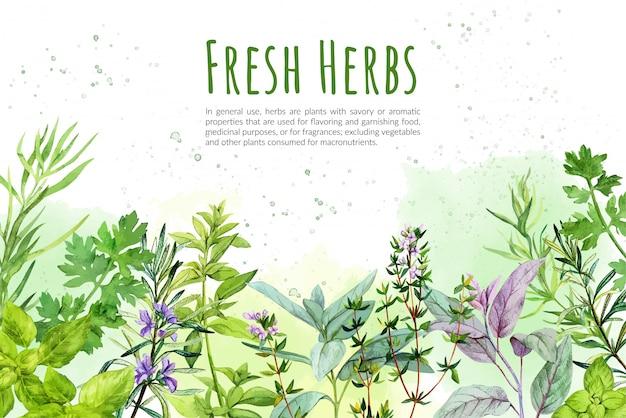 Aquarellhintergrund mit küchenkräutern und -pflanzen