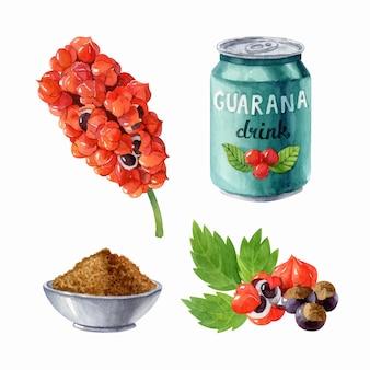 Aquarellillustration mit guarana-pflanzenpulver-energy-drink und samen bio-superfood