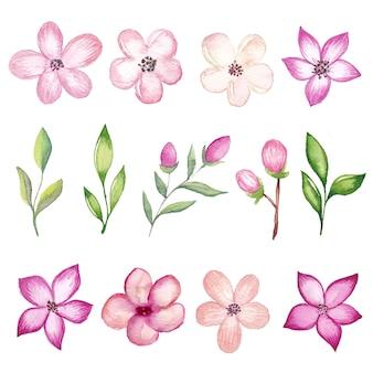 Aquarellkirschblütenzweige und -blumen