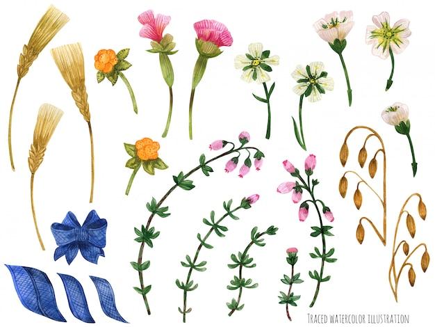 Aquarellpflanzen von schottland