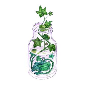 Aquarellstrauß der frühlingsblumen efeublätter in der flasche. auf weißem hintergrund isoliert. hand gezeichnete illustration.