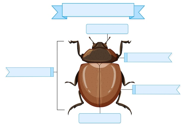 Arbeitsblatt äußere anatomie eines käfers