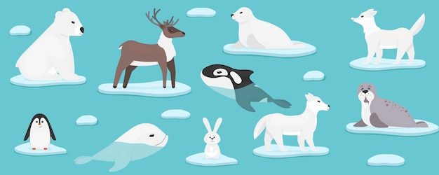 Arktische meerestiere