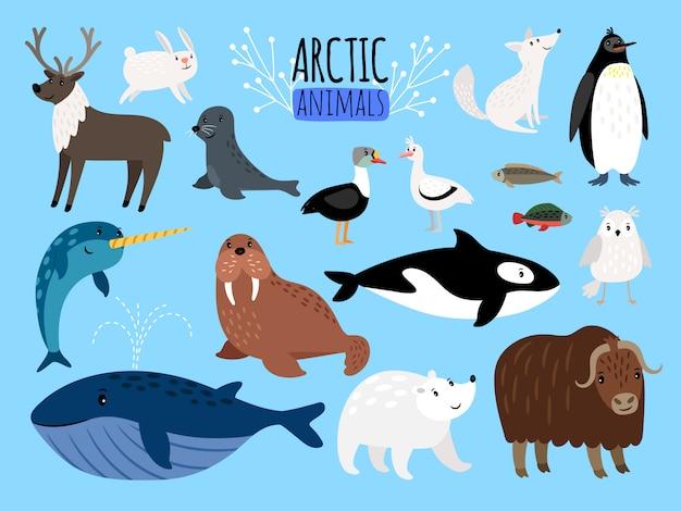 Arktische tiere