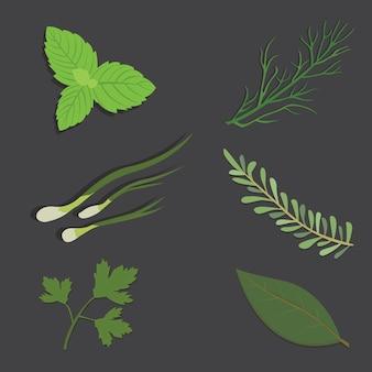 Aromatische kräuter setzen frische kräuter und gewürze setzen isolierte illustration