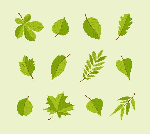 Arten von blättern - flache designikonen des modernen vektors eingestellt. eine große vielfalt von verschiedenen bäumen. verwenden sie diese hochwertigen symbole, um ihre postkarten, banner, flyer, illustrationen und präsentationen zu dekorieren.