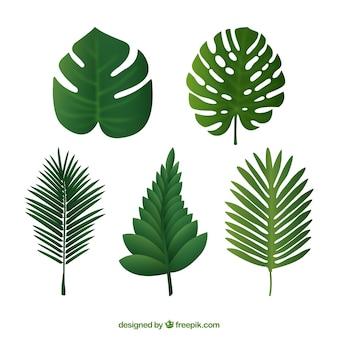 Arten von palmblättern gesetzt