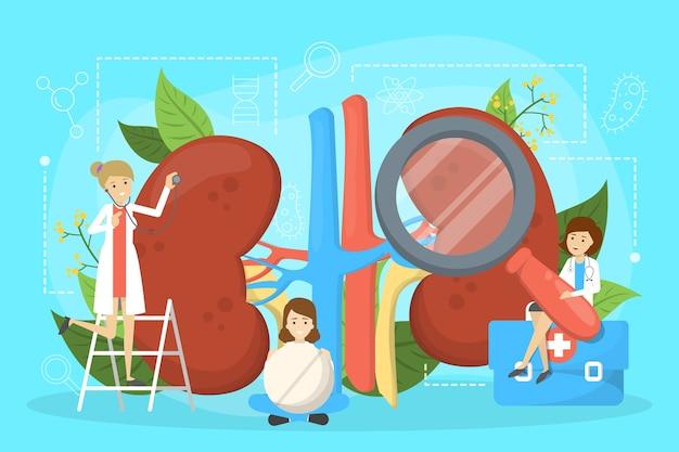 Arzt machen nierenuntersuchung. idee der medizin