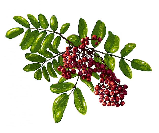 Ashberry branch zusammensetzung
