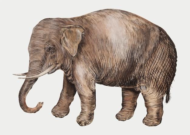 Asiatische elefantillustration der weinlese im vektor