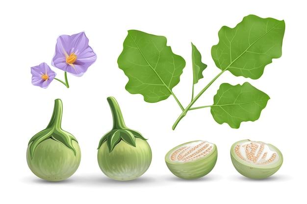 Auberginen, blätter und lila blüten, auberginenschnitt halb realistisch