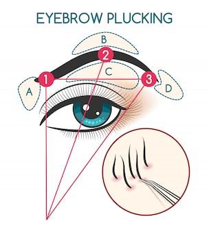 Augenbraue, die abbildung zupft