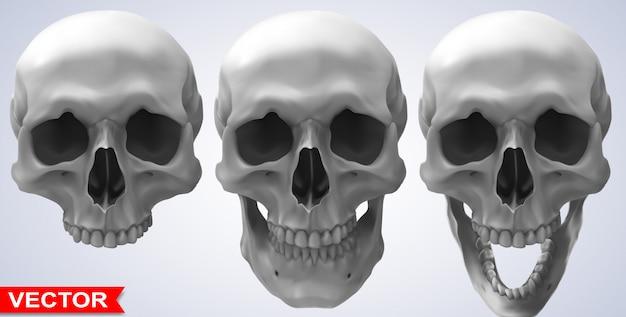 Ausführliche grafische photorealistic menschliche schädel eingestellt