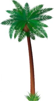 Ausführliche palme