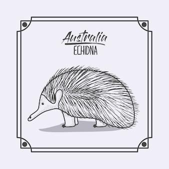 Australien-echidna im rahmen und im einfarbigen schattenbild