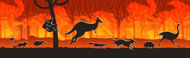 Australische tierschattenbilder, die von den waldbränden in den intensiven orange horizontalen flammen des naturkatastrophenkonzeptes des buschfeuers brennenden bäumen australiens laufen