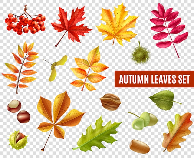Autumn leaves transparent set