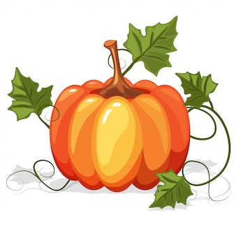 Autumn orange pumpkin vegetable
