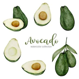 Avocado aquarell sammlung mit obst und blatt mit zweig