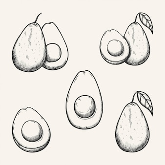 Avocado-fruchtskizzenillustration