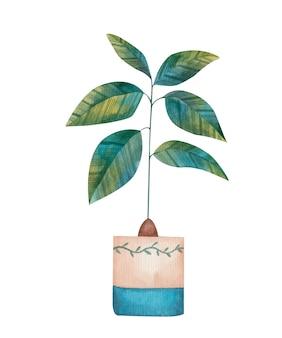 Avocado in der blumentopfaquarellillustration auf weißem hintergrund