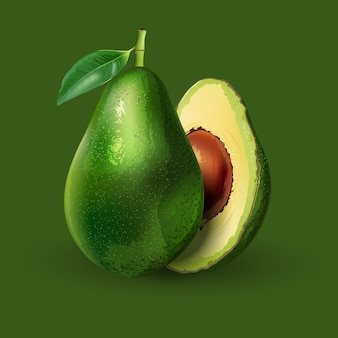 Avocado realistische darstellung