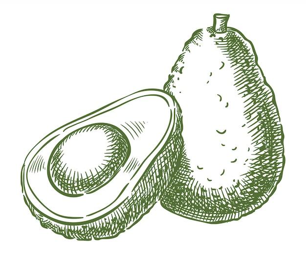 Avocado-vektorskizzen-handzeichnung