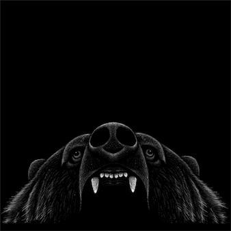 Bärenkopf auf dunkel