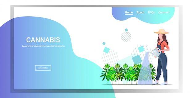 Bäuerin, die cannabis-industriehanfplantage gießt