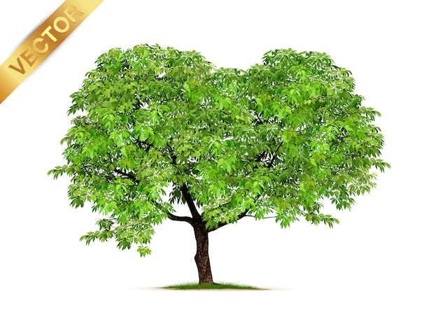Bäume, isoliert auf weiss