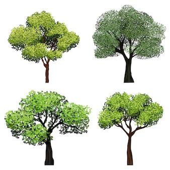 Bäume realistisch. botanische sammlungsbäume des naturgartens mit grünen blattillustrationen