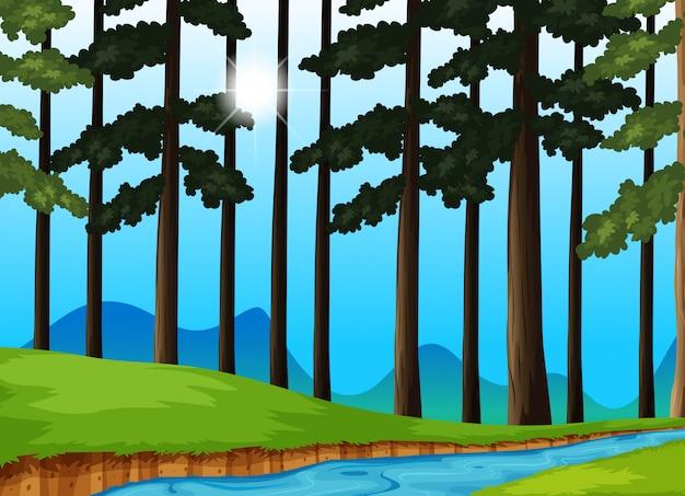Bäume und fluss im wald