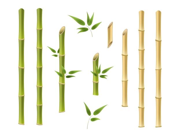 Bambus grün und braun