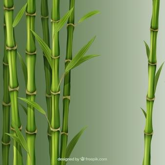 Bambus schilf