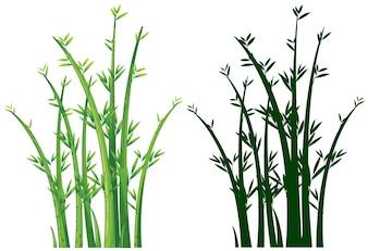 Bambusbäume in grün
