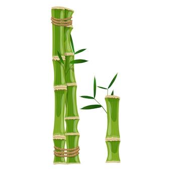 Bambusbuchstabe i mit jungen trieben mit blättern, öko-vektorschrift