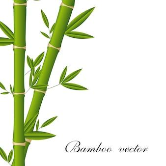 Bambusstöcke mit platz für kopie